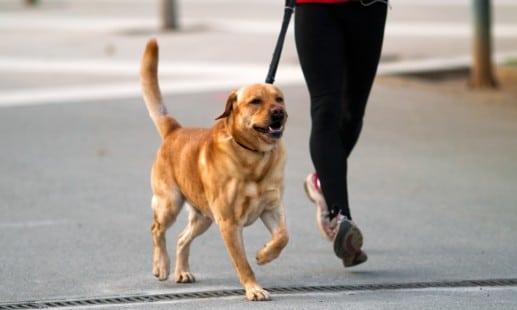 activite sport chien